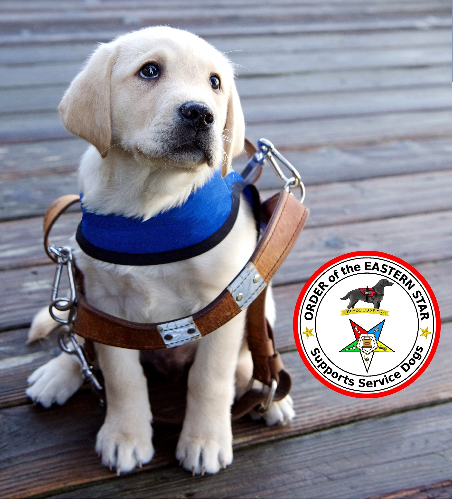 Order Of The Eastern Star Supports Service Dogs